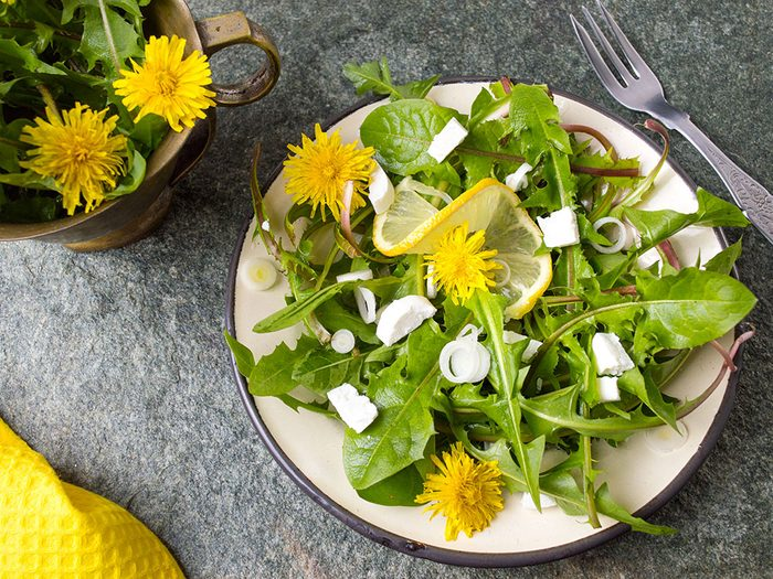 Les aliments amers aident à absorber les nutriments.