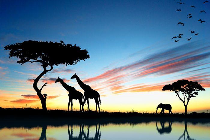 L'Afrique regorge de destinations économiques.