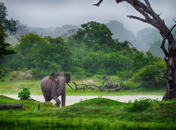 Voyager au Sri Lanka n'est pas très cher.