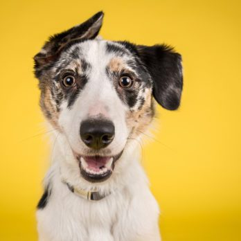 Quand les chiens parlent: ce qui se cache derrière leur langage corporel