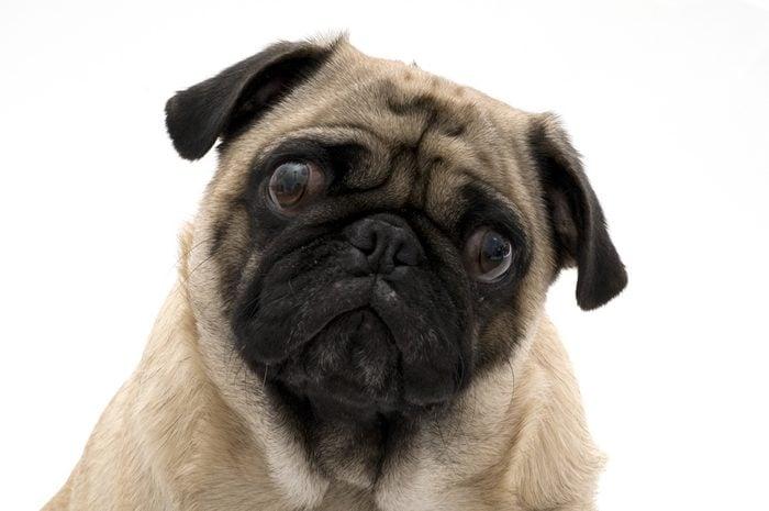 Le langage corporel des chiens inquiets.