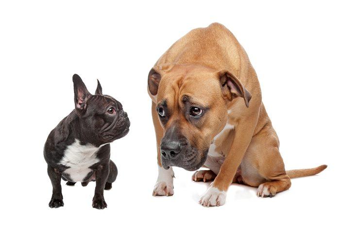 Le langage corporel des chiens en position de soumission.