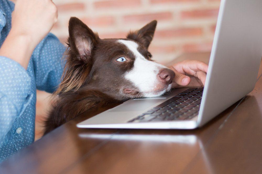 Certains animaux ont des comptes Facebook.