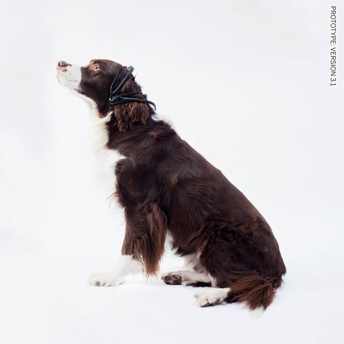 Une technologie pour décoder le langage de votre chien.