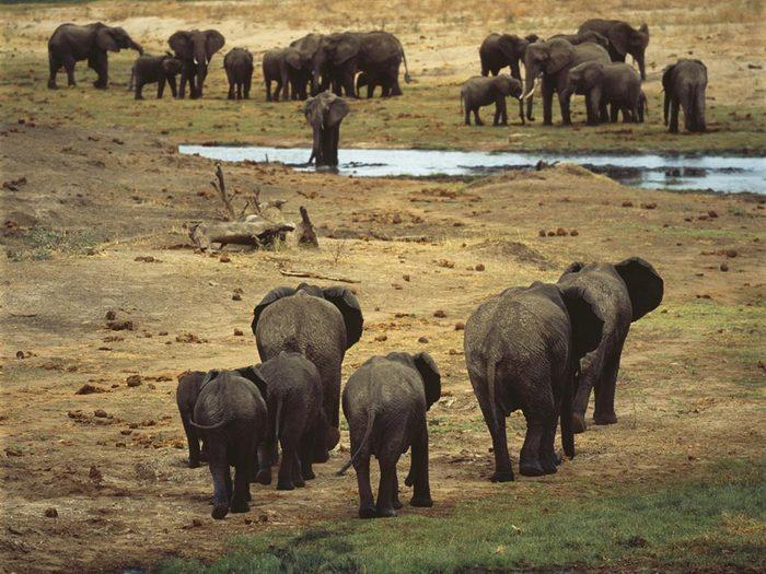 Le bassin du Congo, une destination incontournable, est sérieusement menacée.