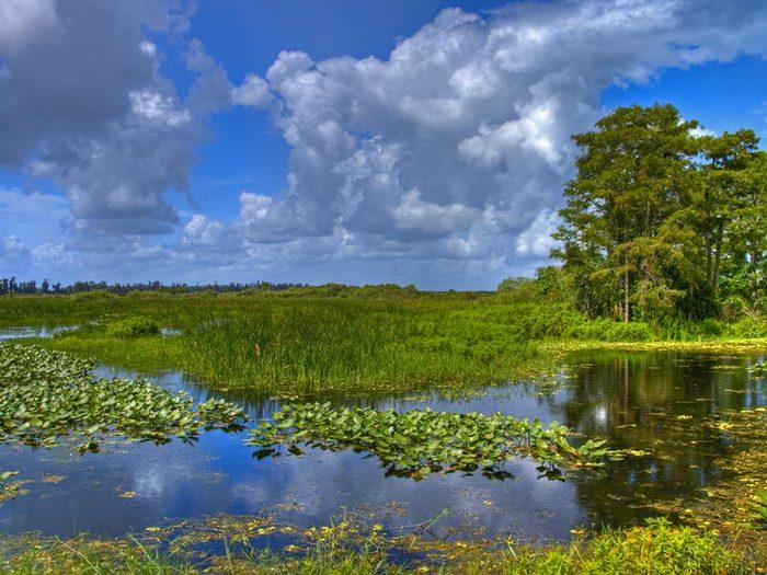 Les Everglades, une destination incontournable, risque de disparaitre.