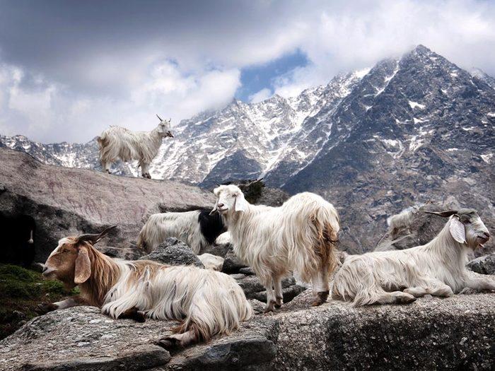 L'Himalaya oriantal, une destination incontournable, risque de disparaitre.
