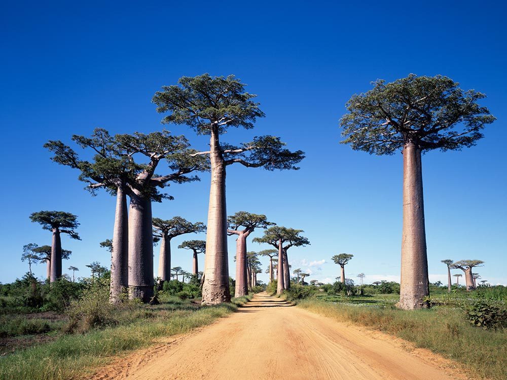 Madagascar, , une destination incontournable, risque de disparaitre.