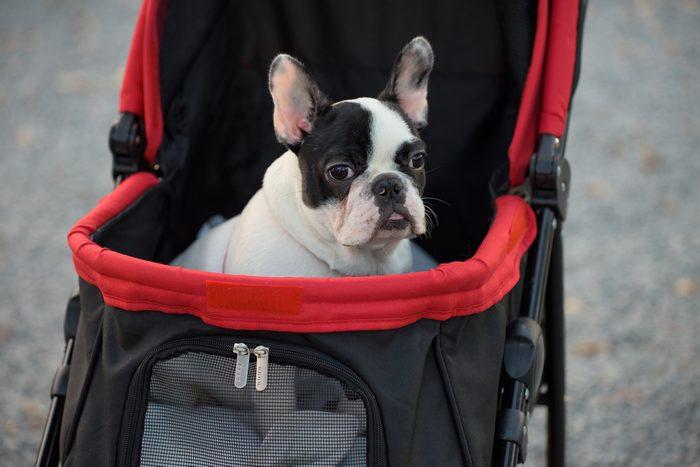 Une poussette pour chiens.