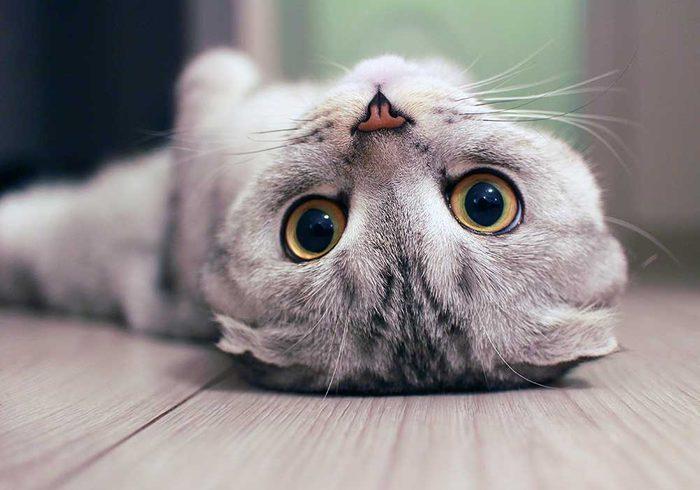 Chat espiègle couché sur le dos.