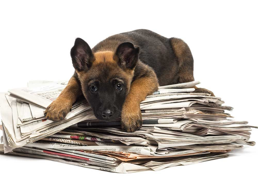 Chien qui rapporte les journaux.