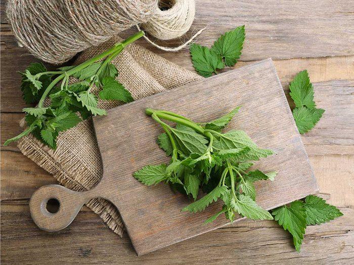 La mélisse officinale : une plante à cultiver dans votre jardin pour votre thé.