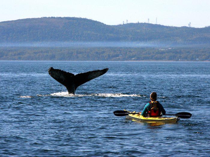 Observation de baleines à Charlevoix.