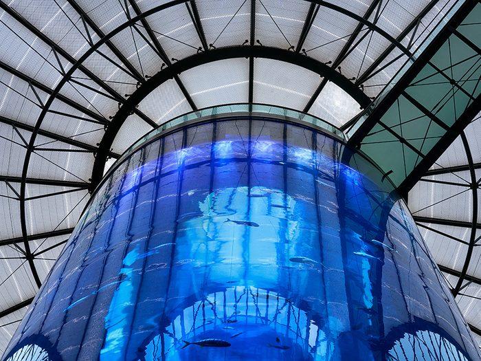 L'AquaDom situé à Berlin, en Allemagne fait partie des ascenseurs fascinants à travers le monde.