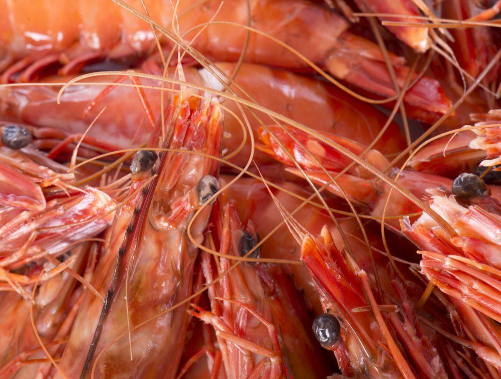 Un des aliments les plus étranges du globe, les crevettes ivres