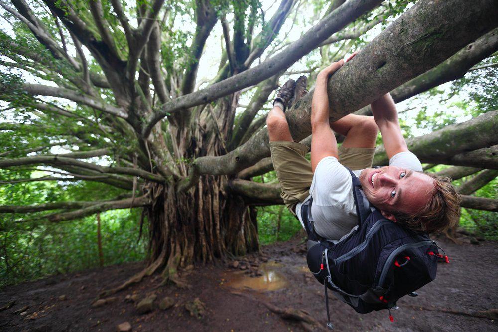 Cet hôtel vous offre la chose étonnante de grimper dans les arbres