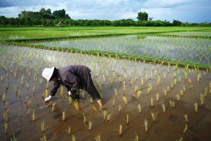 Cet hôtel propose la chose étonnante de planter du riz