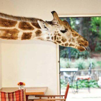 35 choses insolites qu'offrent les hôtels à travers le monde