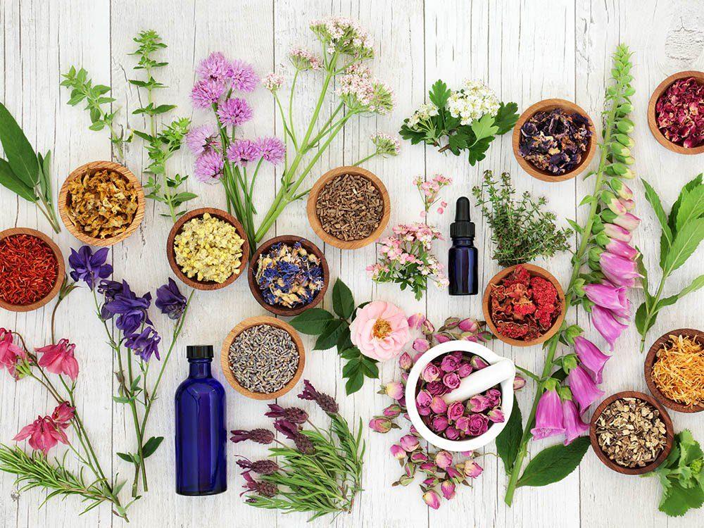 La santé par les plantes est possible grâce à des milliers d'espèces.
