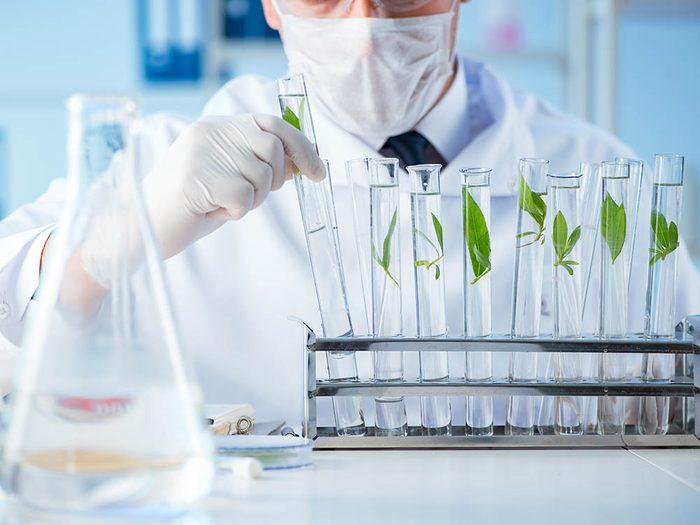 Santé par les plantes: tout commence par des tests en laboratoire.