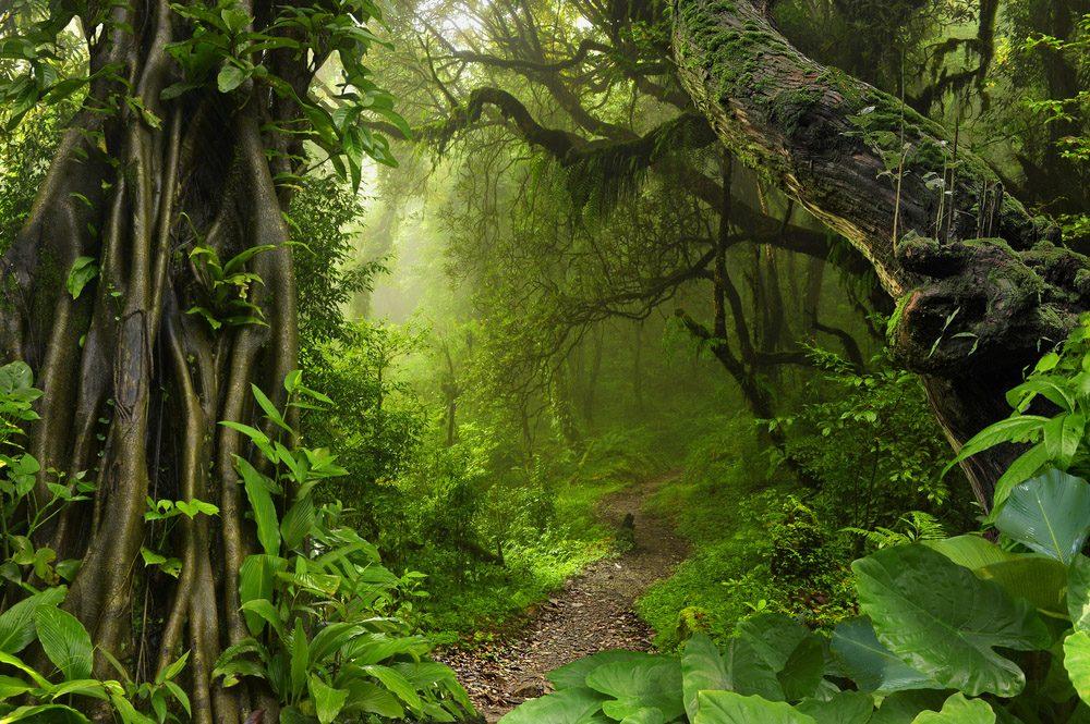 Des bruissement sont entendus dans la forêt tropicale.
