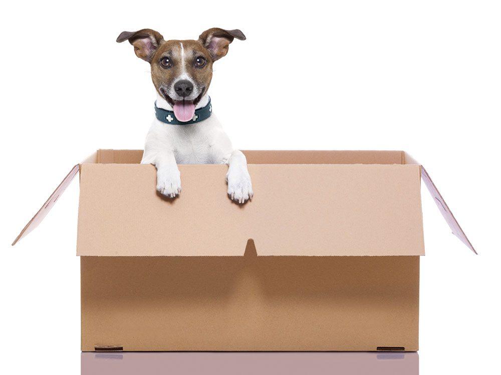 Idées insolites: une agence de publicité renvoie les crottes de chien à leur propriétaire.