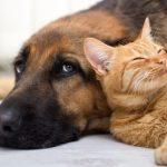 Les meilleurs chiens pour votre famille