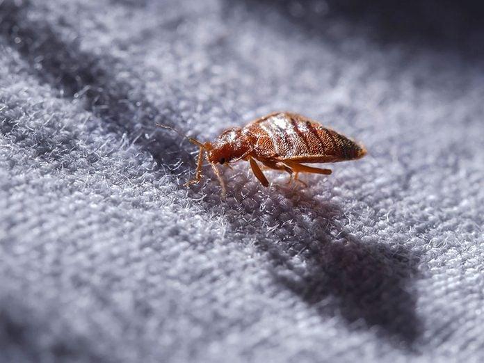 Voici 8 signes que vous avez (peut-être) des punaises de lit.