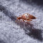8 signes que vous avez (peut-être) des punaises de lit