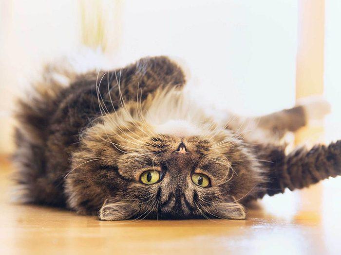 Choses à savoir sur le rire: les vidéos de chats sont plus populaires que celles de chiens.