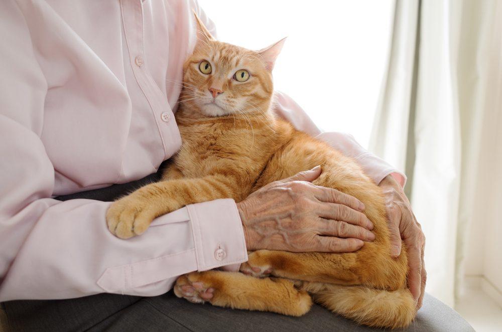La zoothérapie pour contrer le stress