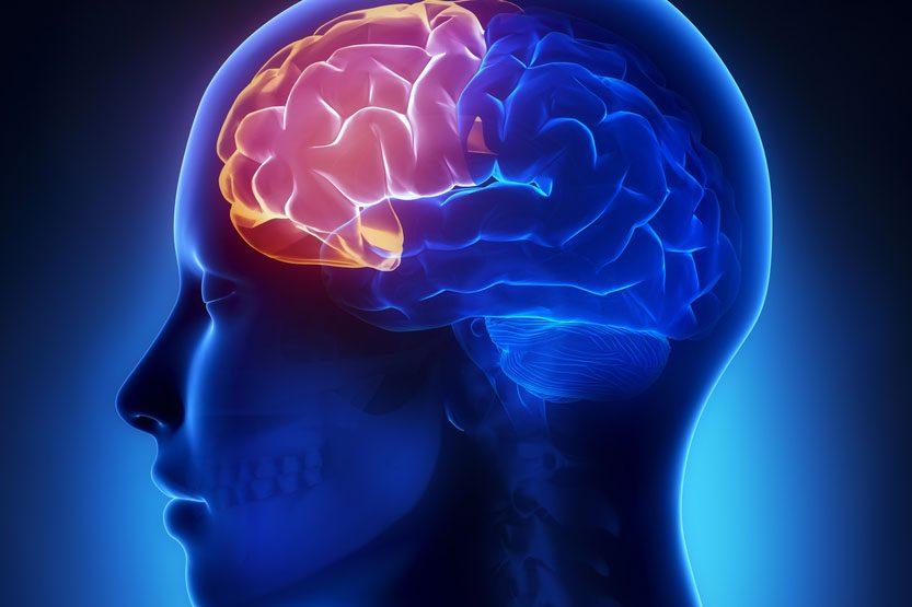1-La patience : où se loge-t-elle dans le cerveau?