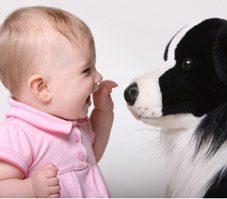 Comment habituer un animal à un nouveau-né