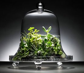 1. Construire un terrarium