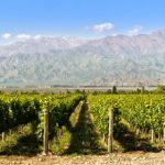 Les 10 destinations les plus abordables pour goûter au vin