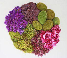 Comment sécher des fleurs: au micro-ondes