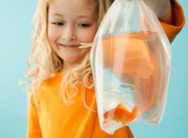 Comment traiter un poisson rouge gagné dans une fête