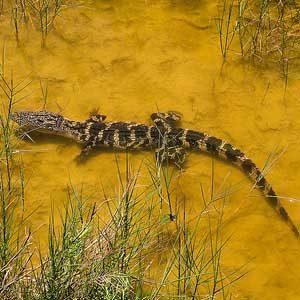 7. Aransas National Wildlife Refuge