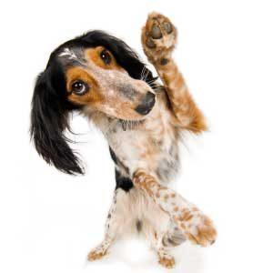 6. Habituer son chien à la présence d'autres animaux et des êtres humains