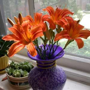2. Respectez les besoins de vos plantes