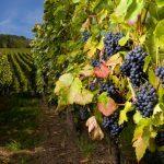 8 trucs pour planifier une belle route des vins