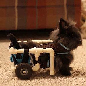 Un chariot pour une lapine