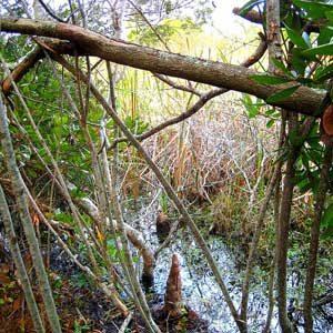 8. Réserve côtière de Buxton Woods