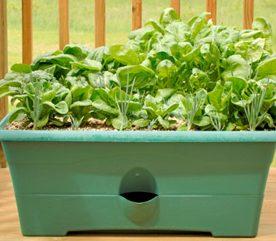 Projet 3 : Planter un jardin en pots