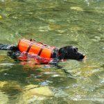 Comment assurer la sécurité de votre animal près de l'eau