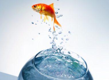Couvrez l'aquarium de votre poisson
