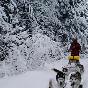 6. Faites une excursion en traîneau à chiens