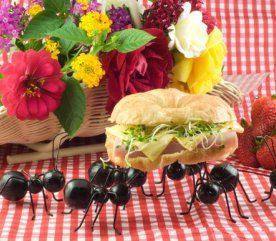 9- Dressez une table séparée pour les insectes