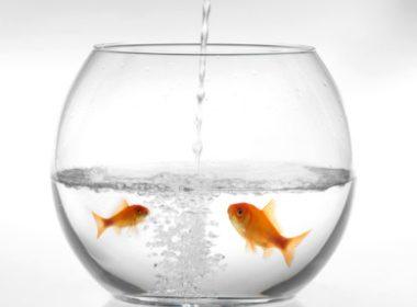 Changez l'eau de son aquarium toutes les semaines