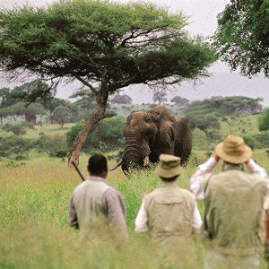 9. Le Lewa Wildlife Conservancy, Kenya